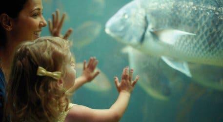 2 oceans aquarium family