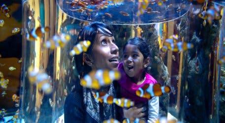 2 oceans aquarium clownfish 3