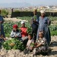 Abalimi Bezekhaya Urban Farming
