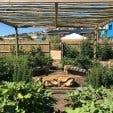 Food gardening course 2