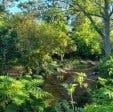 Upper Liesbeek River Garden Newlands Cape Town