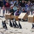 Penguin_Festival
