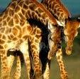 safari vakantie zuid-afrika