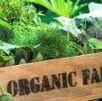 Wild Oats Community Farmer's Market organic produce