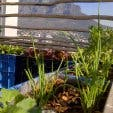 Rooftop Gardens Touching the Earthy Lightly