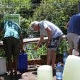 Wasserquelle in Newlands