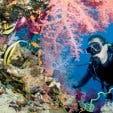 Madiba - diving