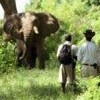safari honeymoon zuid-afrika
