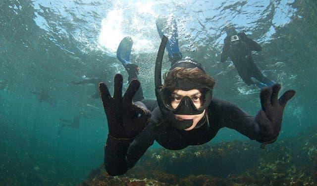snorkelen met zeehonden kaapstad