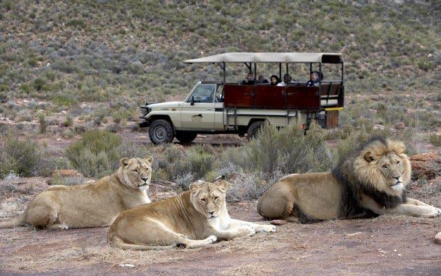 Vente au rabais 2019 diversifié dans l'emballage magasin d'usine Aquila Game Reserve   African Safari   Big 5 Wildlife   Cape ...