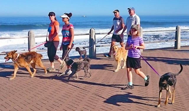 Image result for Paws on the Promenade