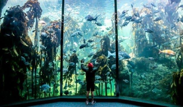 Two_Oceans_Aquarium
