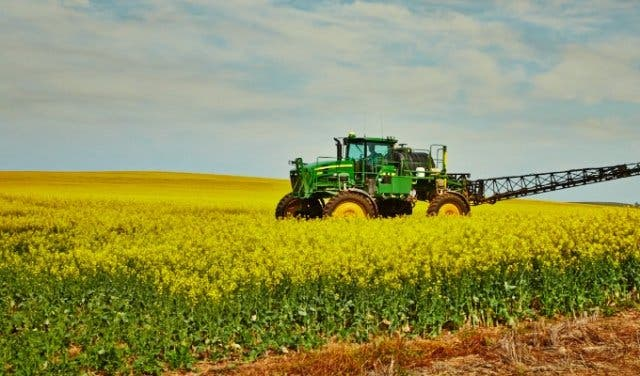B-Well_Festival_of_Yellow_canola_field__South_Africa