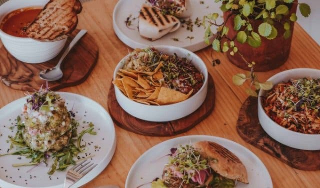 wildsprout_cape_town