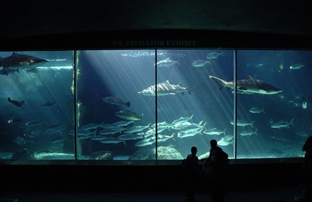 c7b70430d8b4 14. Educate yourself to be kinder to our Earth. While the aquarium is all  about fun and entertainment