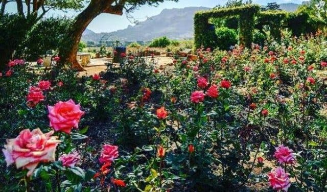 Free And Cheap Things To Do With Kids In Cape Town