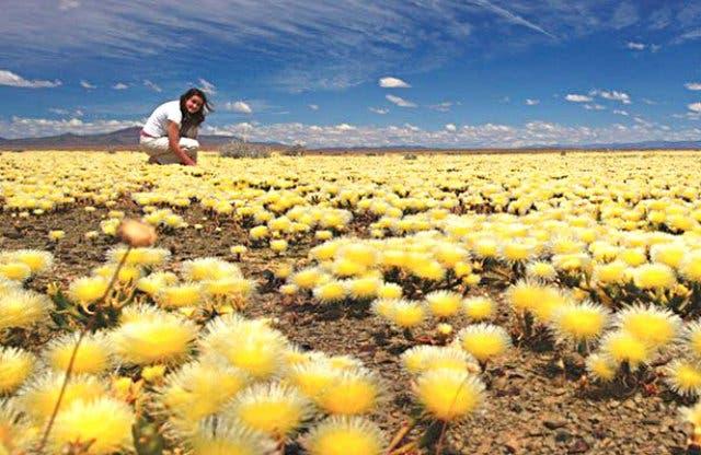 bloemen westkust kaapstad
