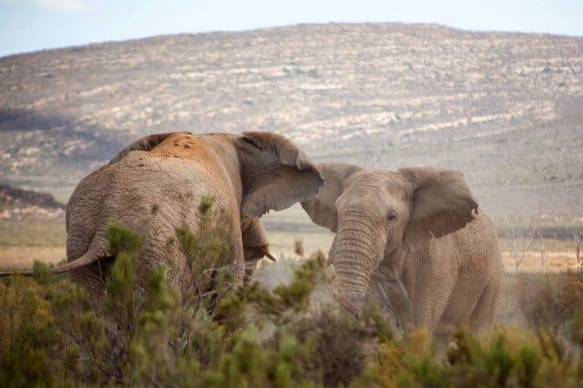 17 Up Close and Personal Encounters with Animals: Attend Yoga with a