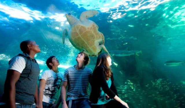 Exciting and Educational Experiences at Cape Town's Only Aquarium