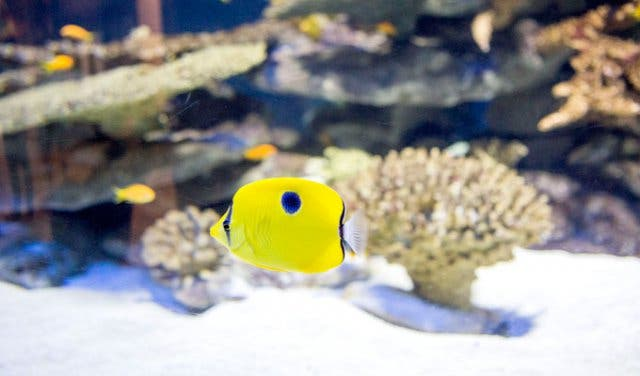 007883e576b5 See species that can t be found in any other aquarium. For example
