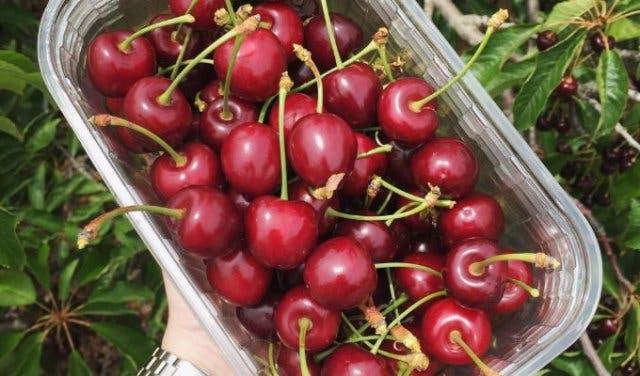 10x Open Boekenplanken : Cherry picking season in ceres