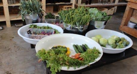 Bay food green naked remarkable, rather